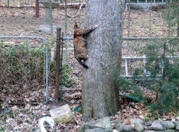 ama up a tree-crop