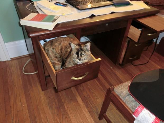hide in desk