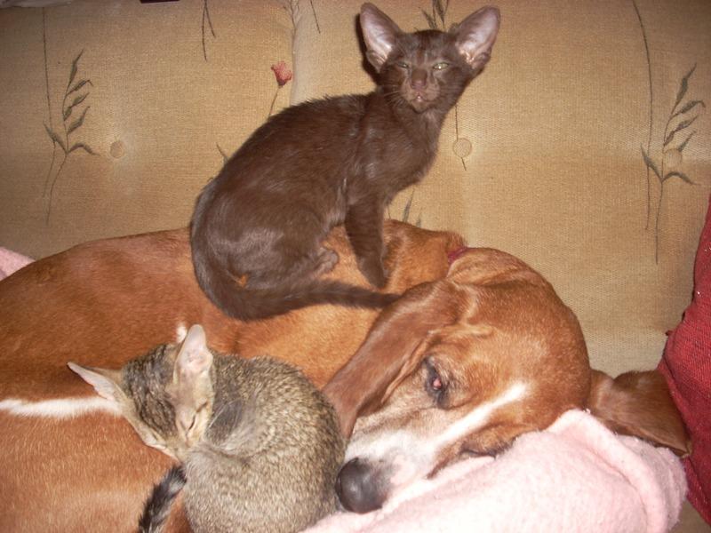 kittensandcharlie2