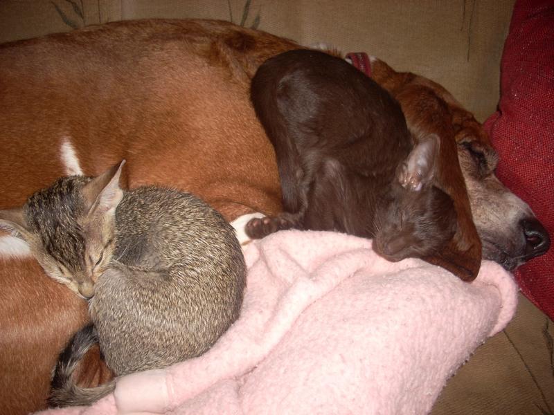 kittensandcharlie3