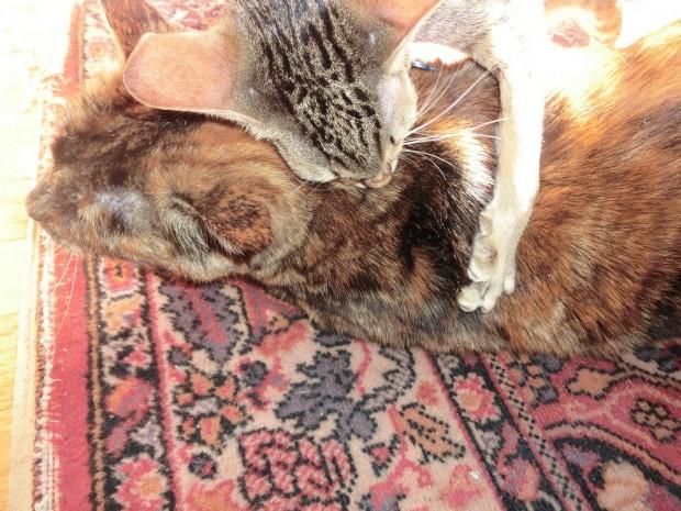 billy ami hug