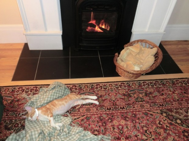 cat enjoyment fireplace 1