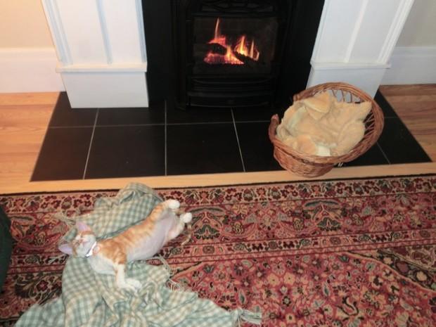 cat enjoyment fireplace 2