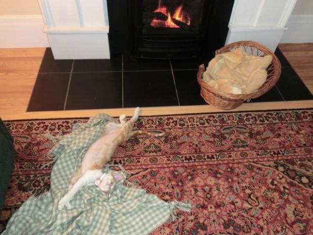 cat enjoyment fireplace 3