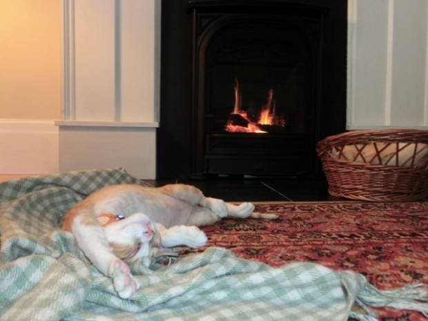 cat enjoyment fireplace 4